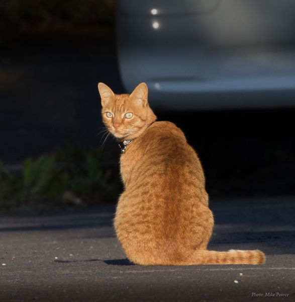 Early morning cat