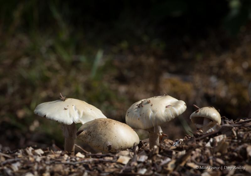 Fungi, Westhay Heath NNR, UK.