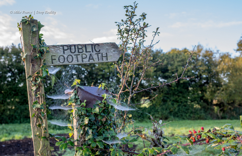 Somerset Levels in Autumn