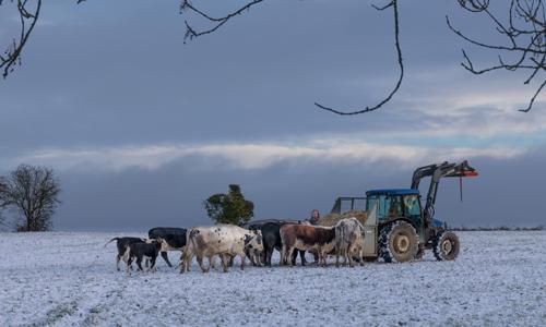 Winter Feed. Somerset, UK.